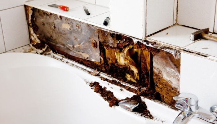 Breaking a Lease Due to Mold in Florida | Mold Attorney in