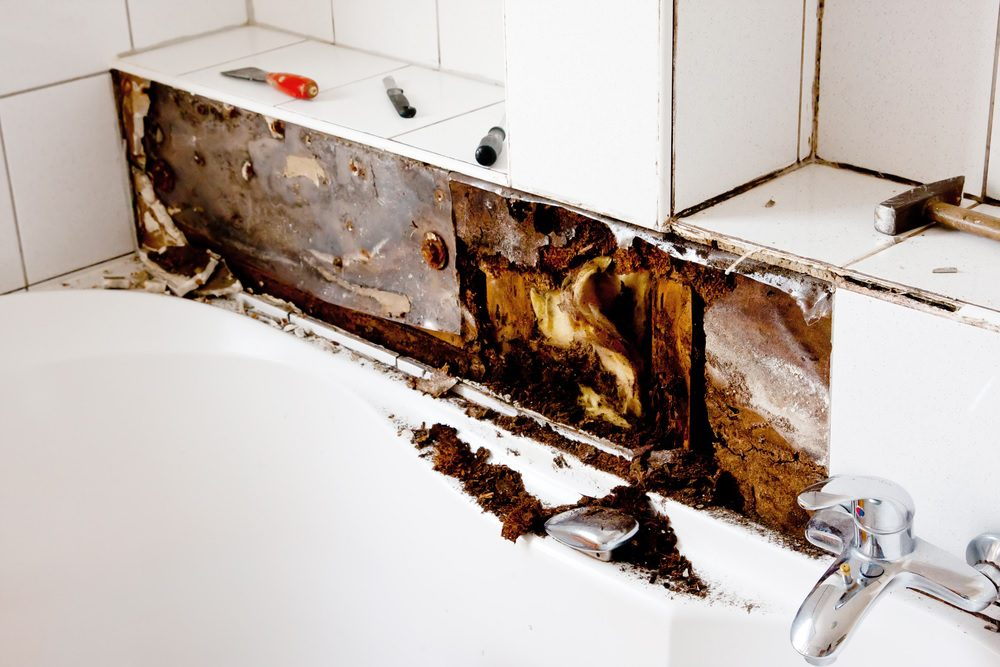 Breaking a lease due to mold florida